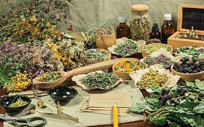 La phytothérapie : la discipline phare de la naturopathie
