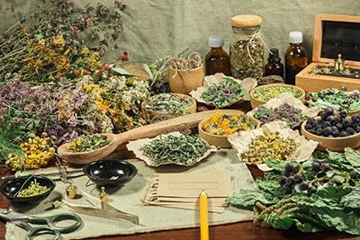 La phytothérapie et l'herboristerie en naturopathie