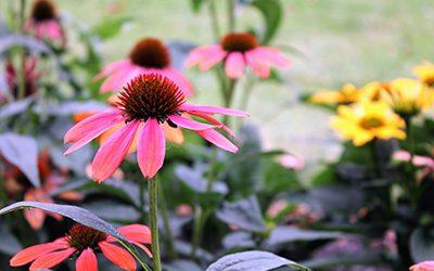 Naturopathie : zoom sur les Fleurs de Bach