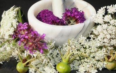 Naturopathe : la philosophie du bien-être